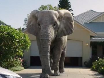 SGIO Insurance Elephant Commercial