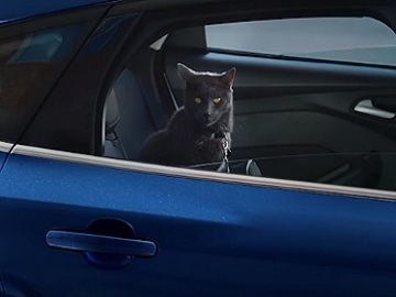 Ford Focus Commercial - Grey Cat