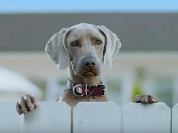 Talking Dog Commercial