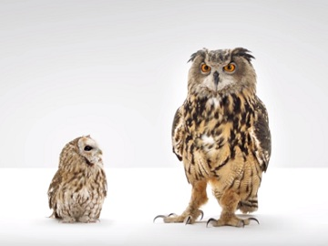 Western Governors University Owls Commercial