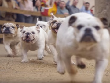 GEICO Bulldogs Commercial