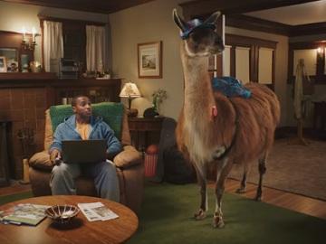 Zappos Llama Commercial