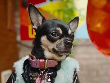 Chihuahua Dolly Pawton in Missguided Advert