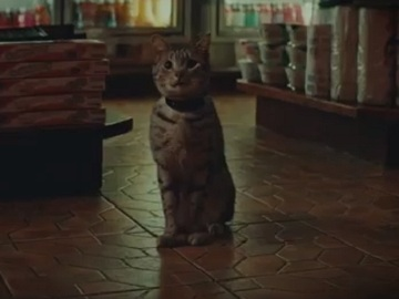 New York Lottery Cat Commercial
