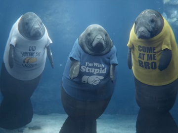 GEICO Sea Cows with T-shirts Commercial