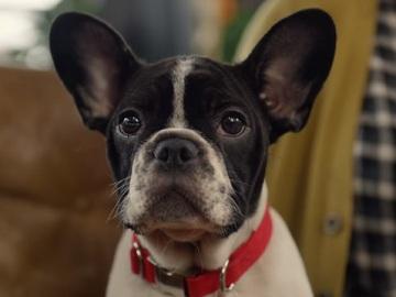 Dog in HSBC TV Advert