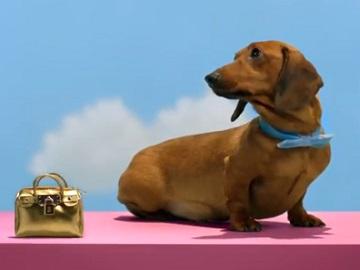 TK Maxx Bags Advert - Dog