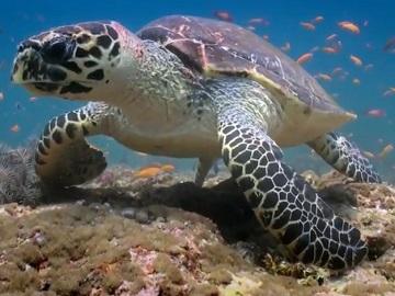 Inspiring Travel Company Advert - Sea Turtle