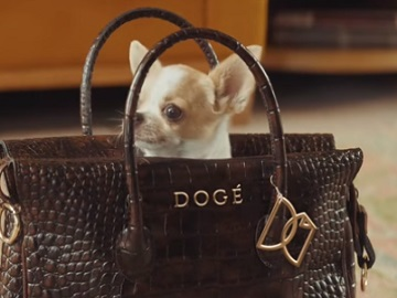 E*TRADE Dogs Commercial - Chihuahua in bag
