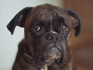 ClearScore Dog Advert - Christmoose