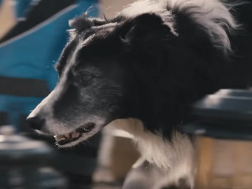 Subaru Forester Commercial Dog