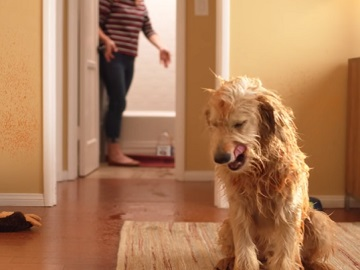 BEHR Dog Commercial