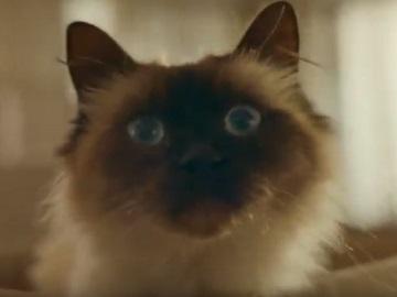 IAMS CatCommercial