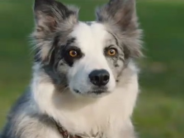 Mastercard Commercial Dog - The Red Ball
