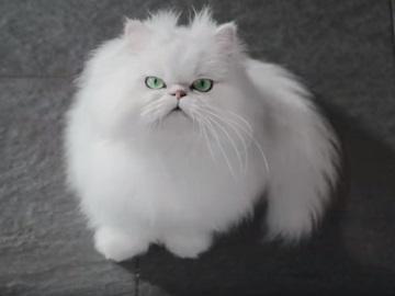 Specsavers Cat Advert