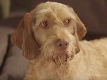 PokerStars Dog Perfect Bluff Advert