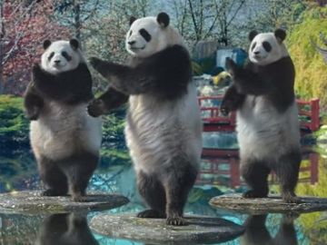 Sudocrem Panda Bears Advert