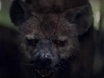 Barnardo's Hyenas Advert