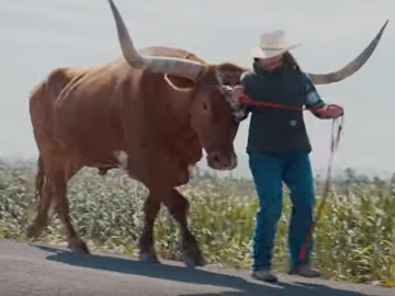 Carhartt Commercial - Bull with giant horns
