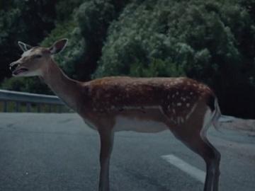 GoCompare Deer Advert