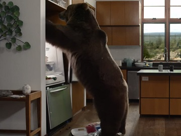 GEICO Bear Commercial