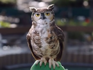 America's Best Contacts & Eyeglasses Talking Owl Commercial