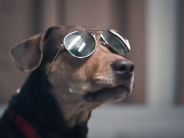 DISH Commercial Dog