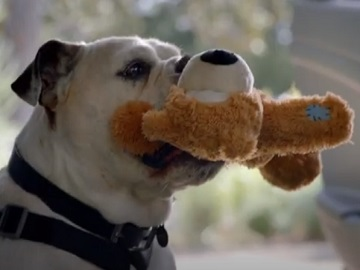 2021 Hyundai Tucson Commercial - Dog & Teddy Bear with Seat Belt On