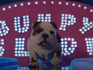Churchill TV Advert - Churchie The Dog