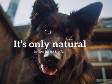 Naturo Natural Pet Food Advert Dog