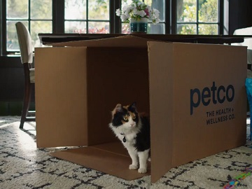 Petco Same Day Commercial Cat