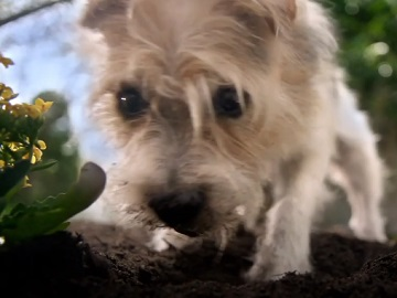 Walmart Bring the Spring Commercial Dog
