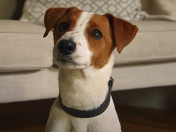 Trainline Woman with Dog Commercial / TV Advert Oh My Dog!