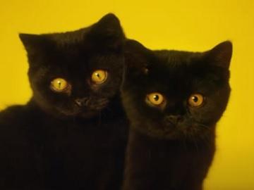 AA Ireland Black Cats Advert