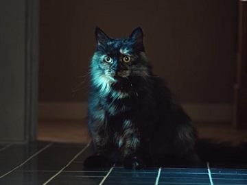 Temptations MixUps Tasty Human Cat Commercial