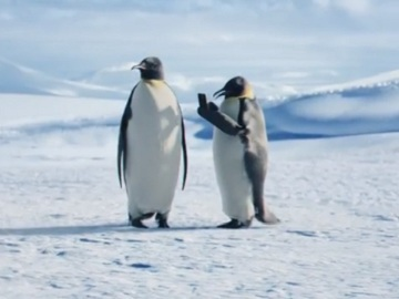 Geico Home Insurance >> GEICO Penguins Commercial - The Great Emperor Penguin Migration