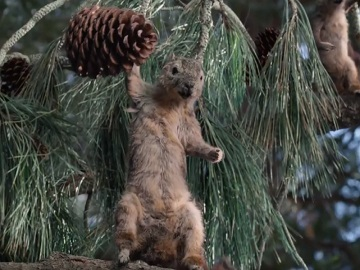 Farmers Auto Insurance >> Farmers Insurance Hall of Claims Squirrells Commercial: Vengeful Vermin